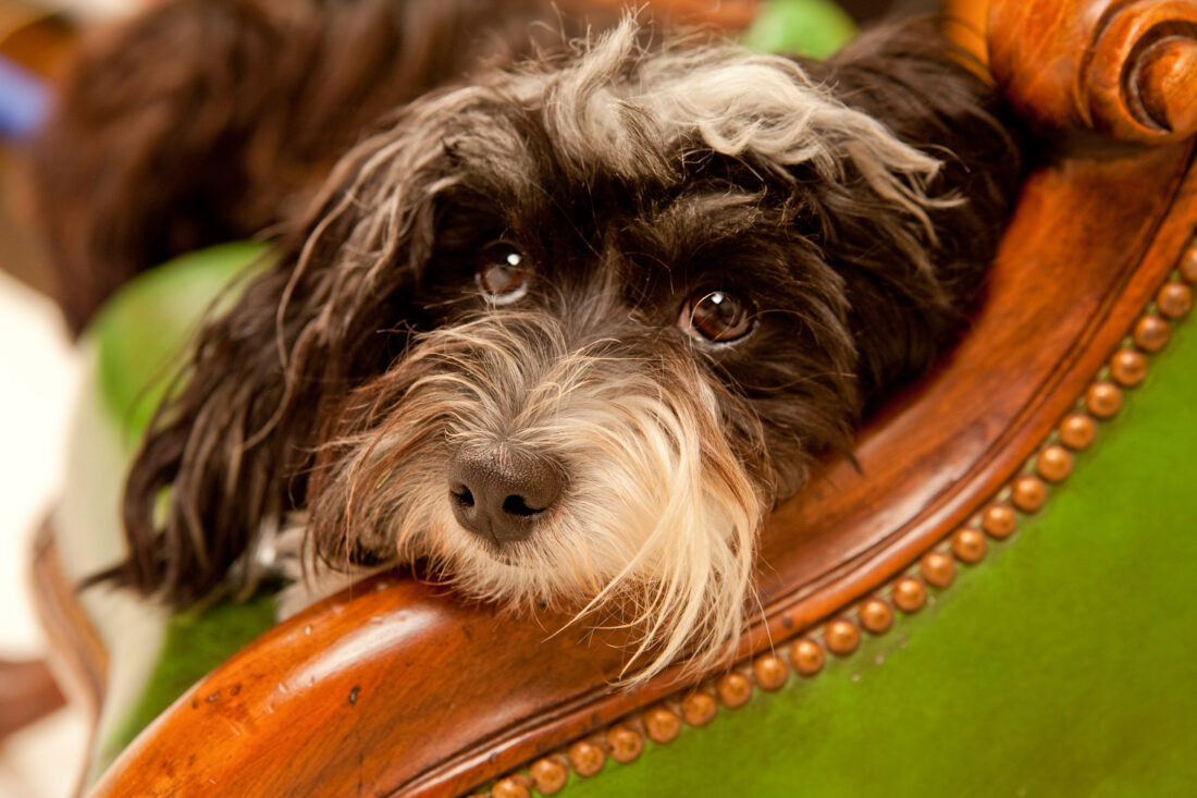 Andaleeb Lilley Photography - Pet Photography